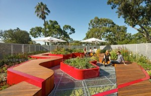 Hassell-Burnley-Green-Roof2-537x345