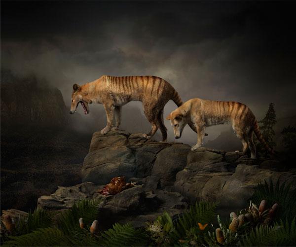 Joseph McGlennon: Thylacine Study Number 5, 2013. Giclee print on archival Hahnemuhle Fine Art Paper. Photographed on location in Van Dieman's Land  100.0 x 120.0 cm