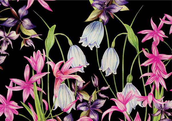 Lily design is available in fabric and wallpaper. Image courtesy of Belinda Christie